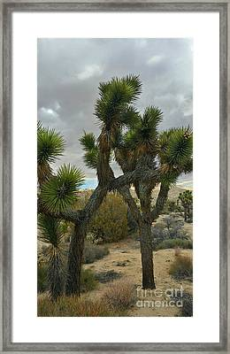 Joshua Cloudz Framed Print