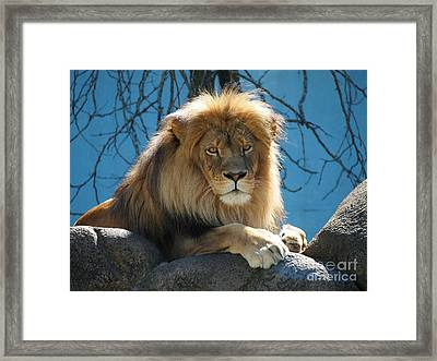 Joshua The Lion On His Rock Framed Print