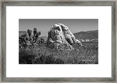 Joshua Tree - 03 Framed Print by Gregory Dyer