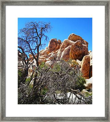 Joshua Tree - 06 Framed Print by Gregory Dyer