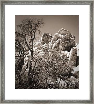 Joshua Tree - 07 Framed Print by Gregory Dyer