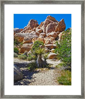 Joshua Tree - 08 Framed Print by Gregory Dyer