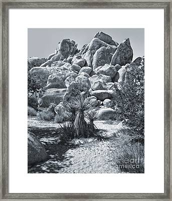 Joshua Tree - 09 Framed Print by Gregory Dyer