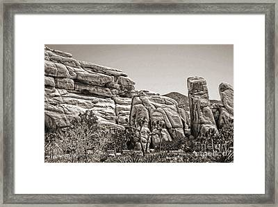 Joshua Tree - 11 Framed Print by Gregory Dyer