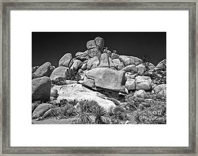 Joshua Tree - 15 Framed Print by Gregory Dyer