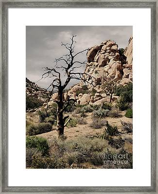 Joshua Tree - 16 Framed Print by Gregory Dyer