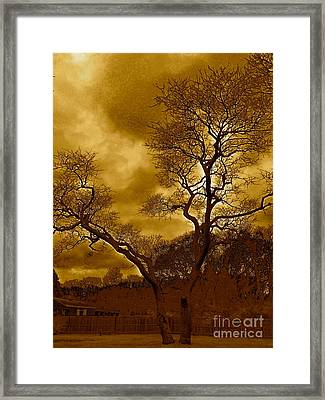 Joshua Tree Framed Print by Q's House of Art ArtandFinePhotography
