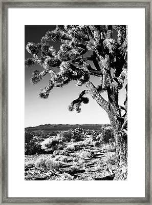 Joshua Tree Bw Framed Print by John Rizzuto