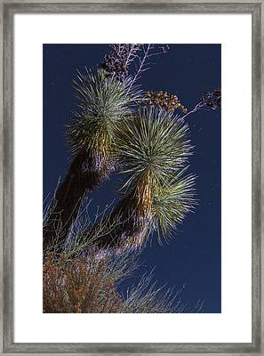 Joshua Tree By Moonlight Framed Print