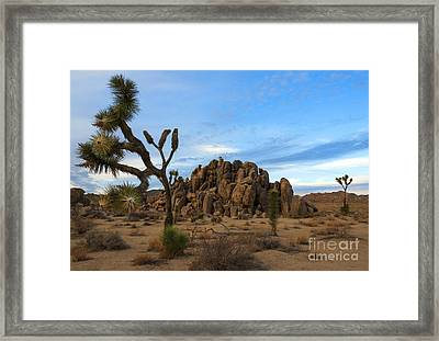 Joshua Tree Cloud Explosion Framed Print