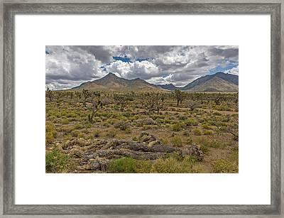Joshua Tree Forest In Arizona Framed Print by Willie Harper