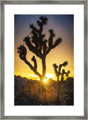 Joshua Tree Glorious Sunrise Framed Print by Michael Filippoff