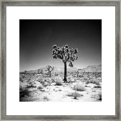 Joshua Tree Holga 1 Framed Print by Alex Snay