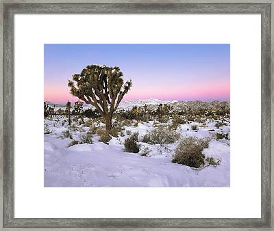 Joshua Tree In Snow Framed Print