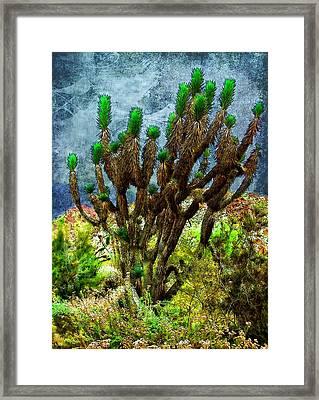 Joshua Tree  Framed Print by Mariola Bitner