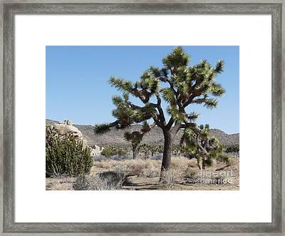 Joshua Tree National Park 6 Framed Print by Deborah Smolinske