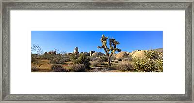 Joshua Tree National Park, Spring Framed Print by Panoramic Images