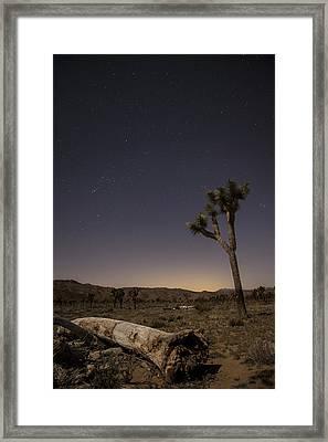 Joshua Tree Night 3 Framed Print
