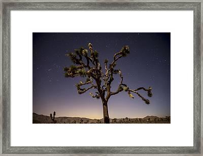 Joshua Tree Night Framed Print by Lee Kirchhevel