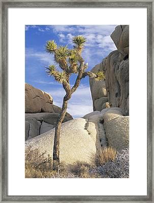 Joshua Tree Np  Framed Print