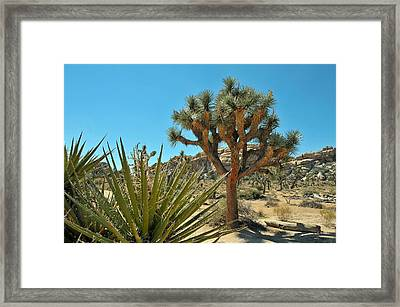 Joshua Tree Np Framed Print by Paul Van Baardwijk