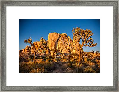 Joshua Tree Sunset Glow Framed Print by Peter Tellone
