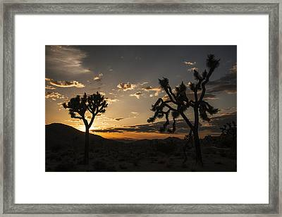 Joshua Tree Sunset Silhouette 2 Framed Print