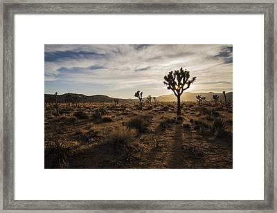 Joshua Tree Sunset Silhouette Framed Print