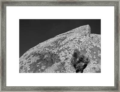 Joshua Tree Textures Framed Print by Peter Tellone
