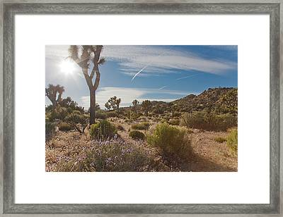 Joshua Tree Using A Tripod Framed Print