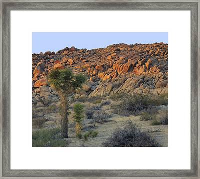 Joshua Tree With Offsrping Framed Print