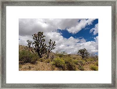 Joshua Trees And Wildflowers Framed Print by Willie Harper