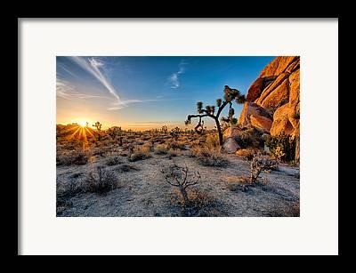 Joshua Tree Np Framed Prints