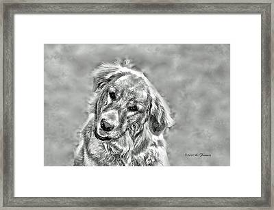 Framed Print featuring the photograph Josie by Kenny Francis
