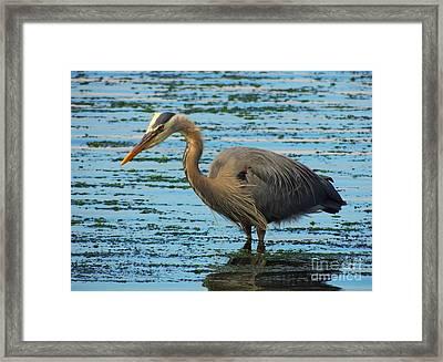 Josy's Heron Framed Print