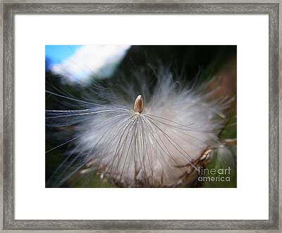 Framed Print featuring the photograph Journey Into New Life by Agnieszka Ledwon