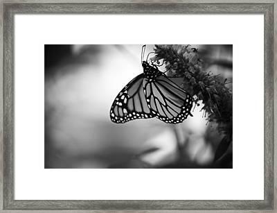 Journey On Framed Print