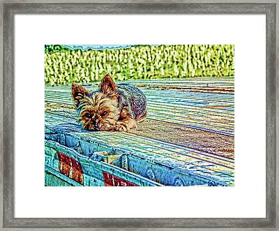 'jovie' Truckin Dogs Need Breaks Too Framed Print