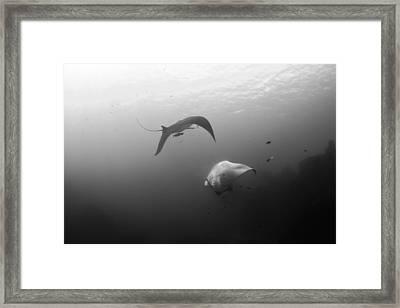 Joy Framed Print by David Valencia