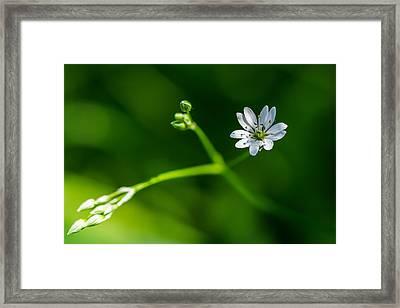 Joy Of Life - Featured 3 Framed Print by Alexander Senin