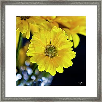 Joy Framed Print by Scott Pellegrin