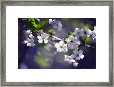 Joyful Cherry Blossom Framed Print