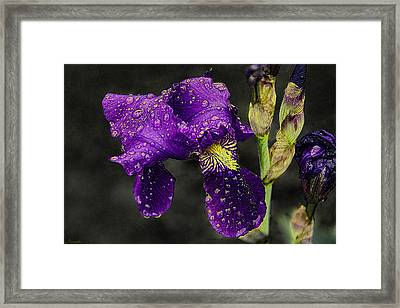 Floral Tears Framed Print by Renee Anderson
