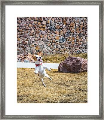 Joyful Jumper Framed Print by Miki  Finn