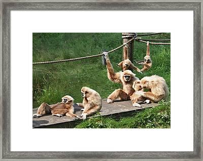 Joyful Monkey Family Framed Print