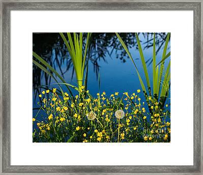 Joys Of Summer Framed Print