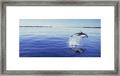 J.puddifoot Pacific White Sided Dolphin Framed Print by Jason Puddifoot