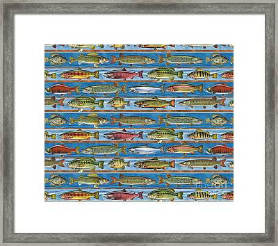 Jqw Fish Row Pillow Framed Print