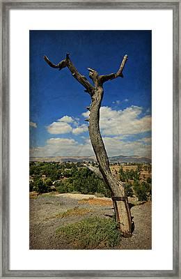 Judas Tree -- Jesus Christ Superstar  Framed Print by Stephen Stookey