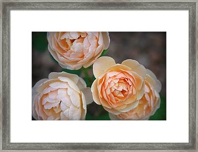 Jude The Obscure Framed Print by CarolLMiller Photography